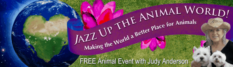 Jazz Up The Animal World with Judy